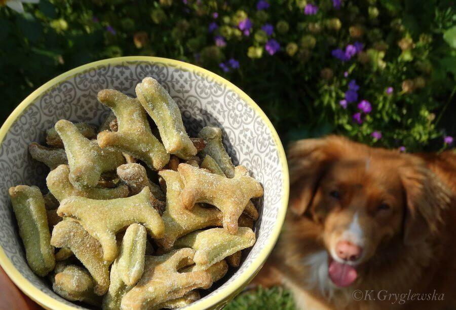 szpinakowe ciastka dla psa w tle pies