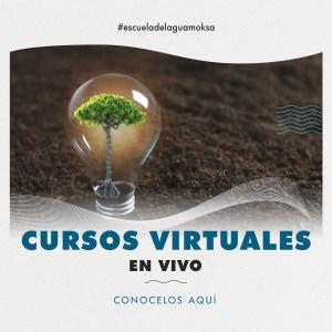 cursos virtuales en vivo