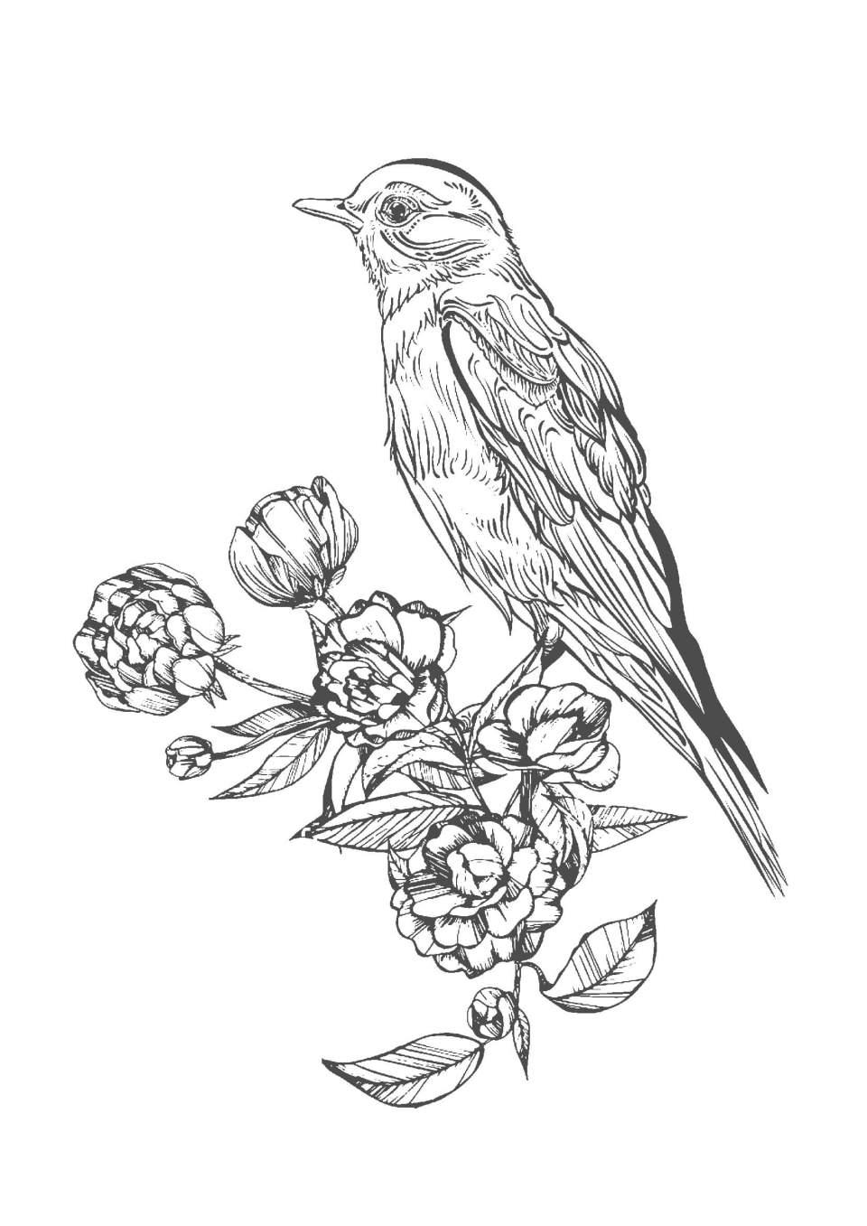大人の塗り絵 鳥と花vol.2(無料印刷)   もくもくん 知育プリントキッズ