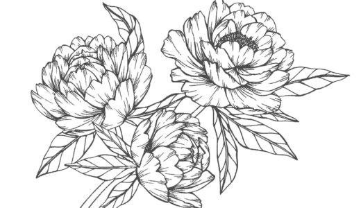 大人の塗り絵 花(無料コロリアージュ)   もくもくん 知育プリントキッズ