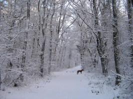 Landgoed_Terborgh-Evertsbos