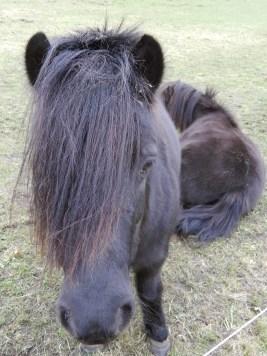 pony_026_s