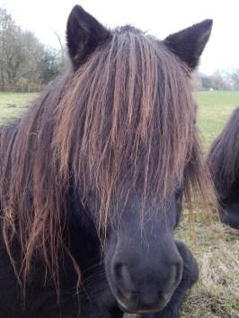 pony_027_s