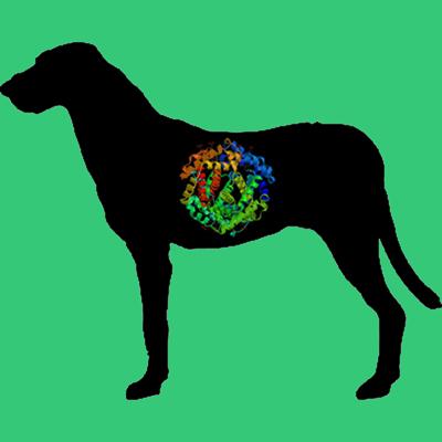 Dog Renin, C-terminal 8x His tag