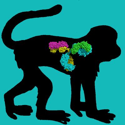 Cyno Monkey IgG Depleted Serum