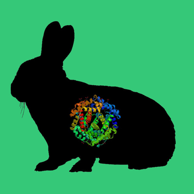 Active rabbit tPA, recombinant