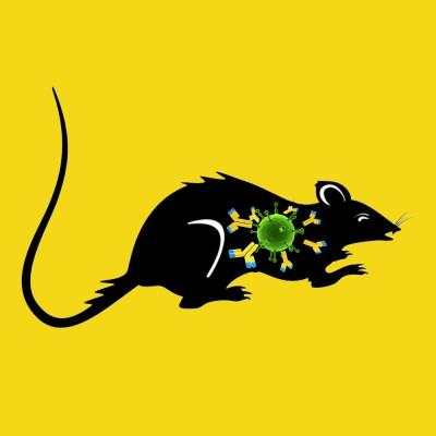 Rabbit anti rat PAI-1 IgG fraction