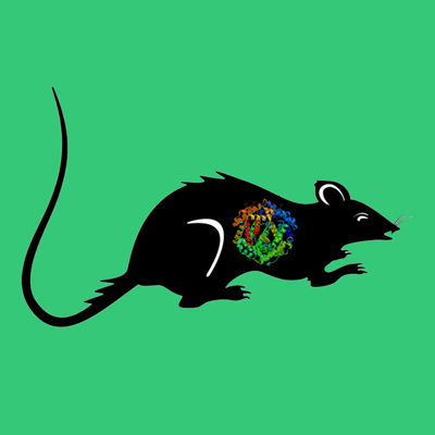 Active rat tPA, two chain recombinant