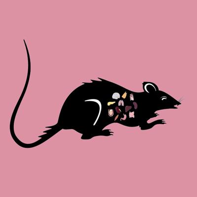 Rat Kidney Lyophilized Powder