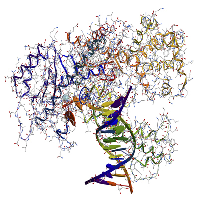 DNA Polymerases