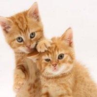 Два кота - популярные песни