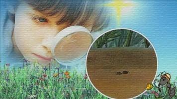 Детский клип - Муравьиная квартира