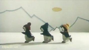 Текст песни - Три пингвина