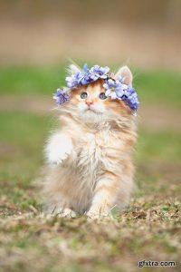 Котомания – Коты в цветочных горшках