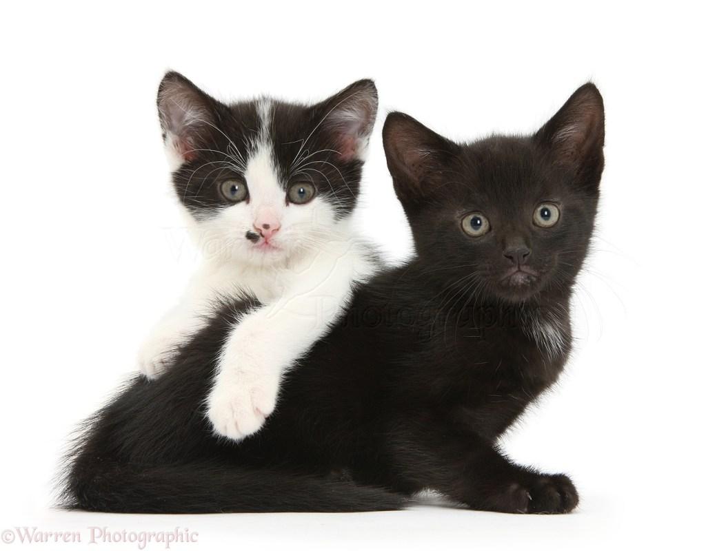 Популярные песни про котов - Кошки