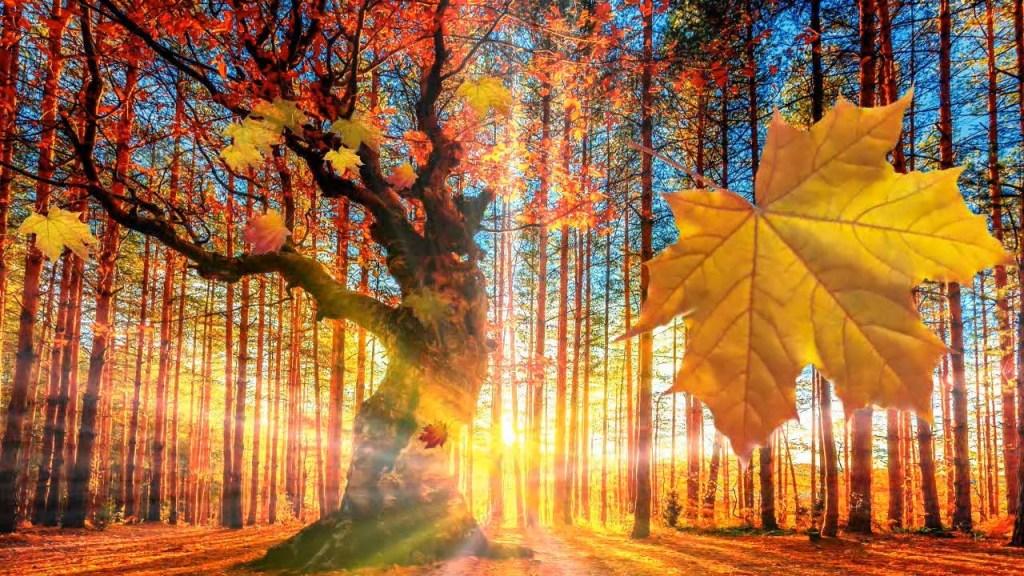 Наступила осень - текст песни про осень