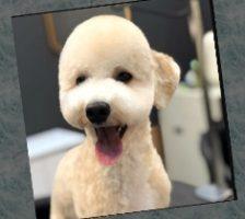 Слайдшоу - Собачьи стрижки – До и после