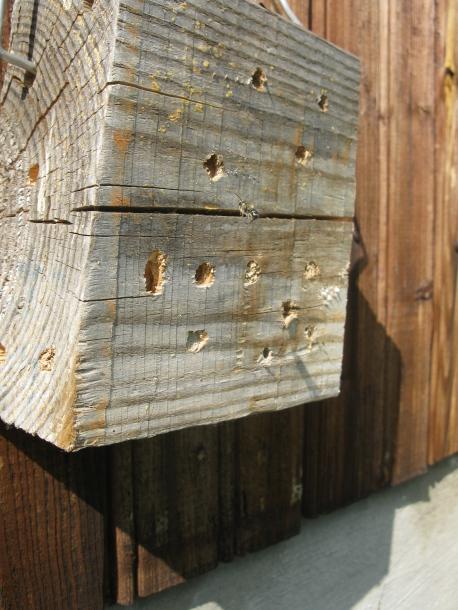 Все форумы > Это паразиты или нет для пчёл Осмий?