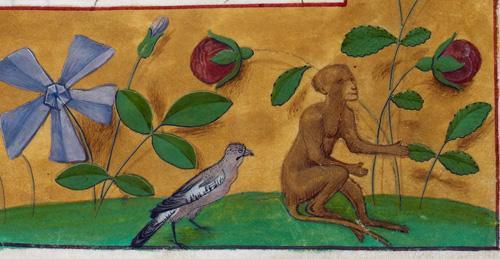 Bird and monkey