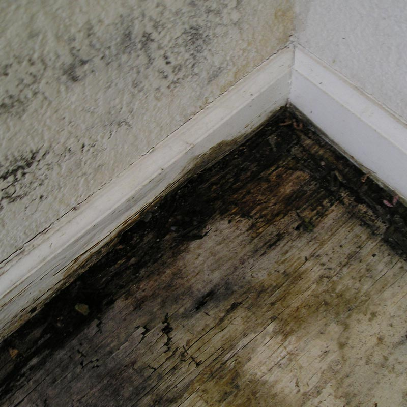 Image Result For How To Get Rid Of Black Mold In Ba T