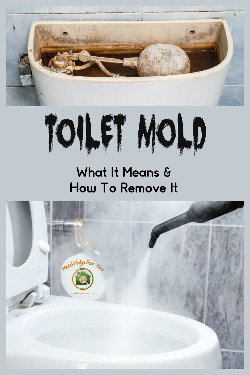 toilet mold what it is how to remove