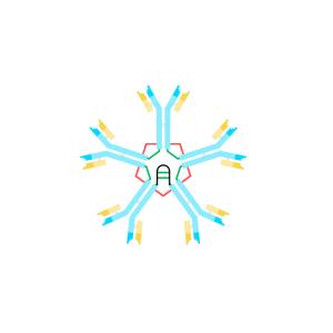 Anti IgM Antibody Monoclonal (Human)