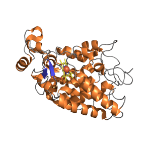 Horseradish Peroxidase Biotinylated
