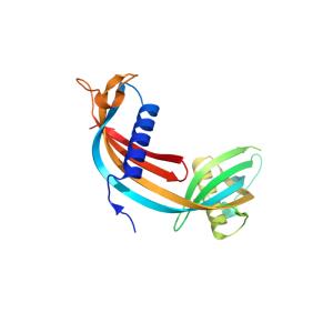 Cystatin C Antibody (Chicken Polyclonal)
