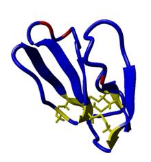 Calciseptine