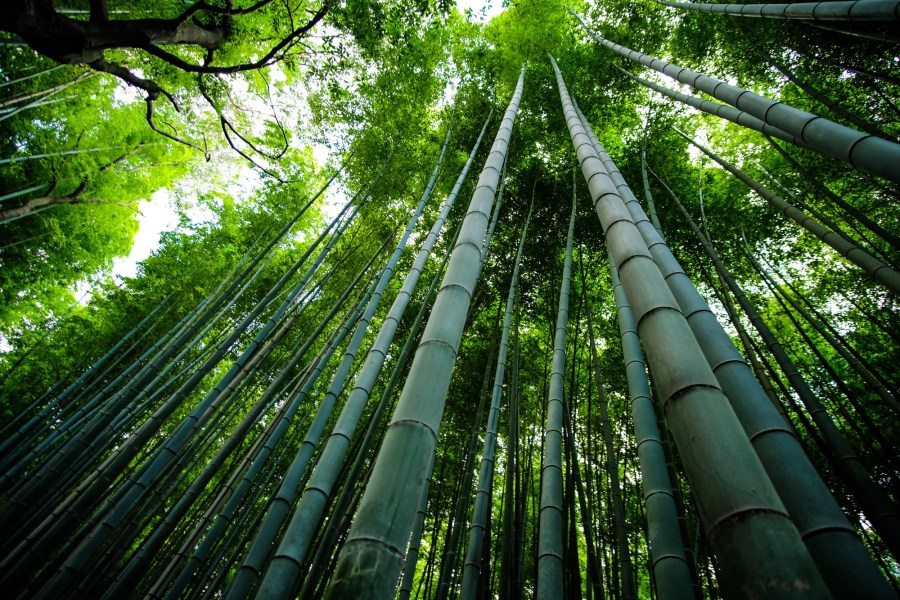 A Decade of Breakthroughs with Bamboo