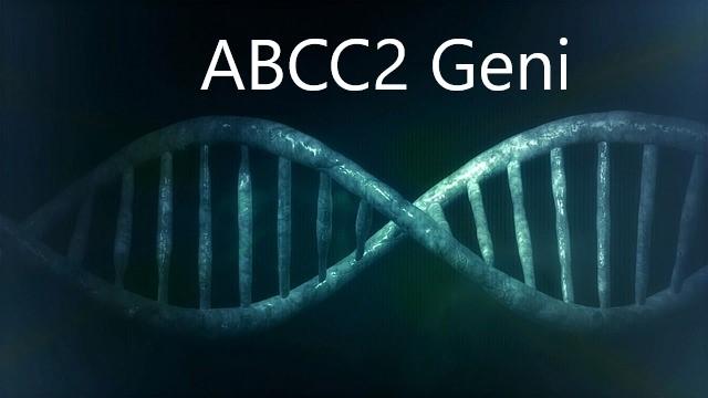 ABCC2 GENİ NEDİR