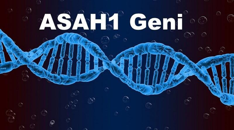 ASAH1 Geni Nedir?