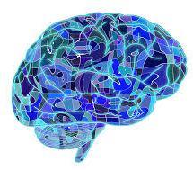 Beynin Deneyim Organizasyonu