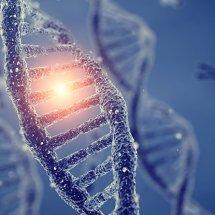 Tuhaf Bir Yeni DNA Düzenlemesi, Stres Altındaki Hayvanlarda Bulundu