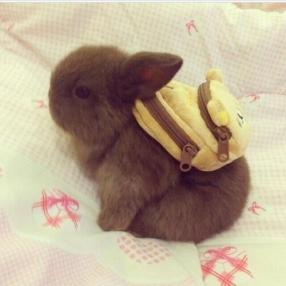 Do you think there are baby carrots in the baby bunny backpack?