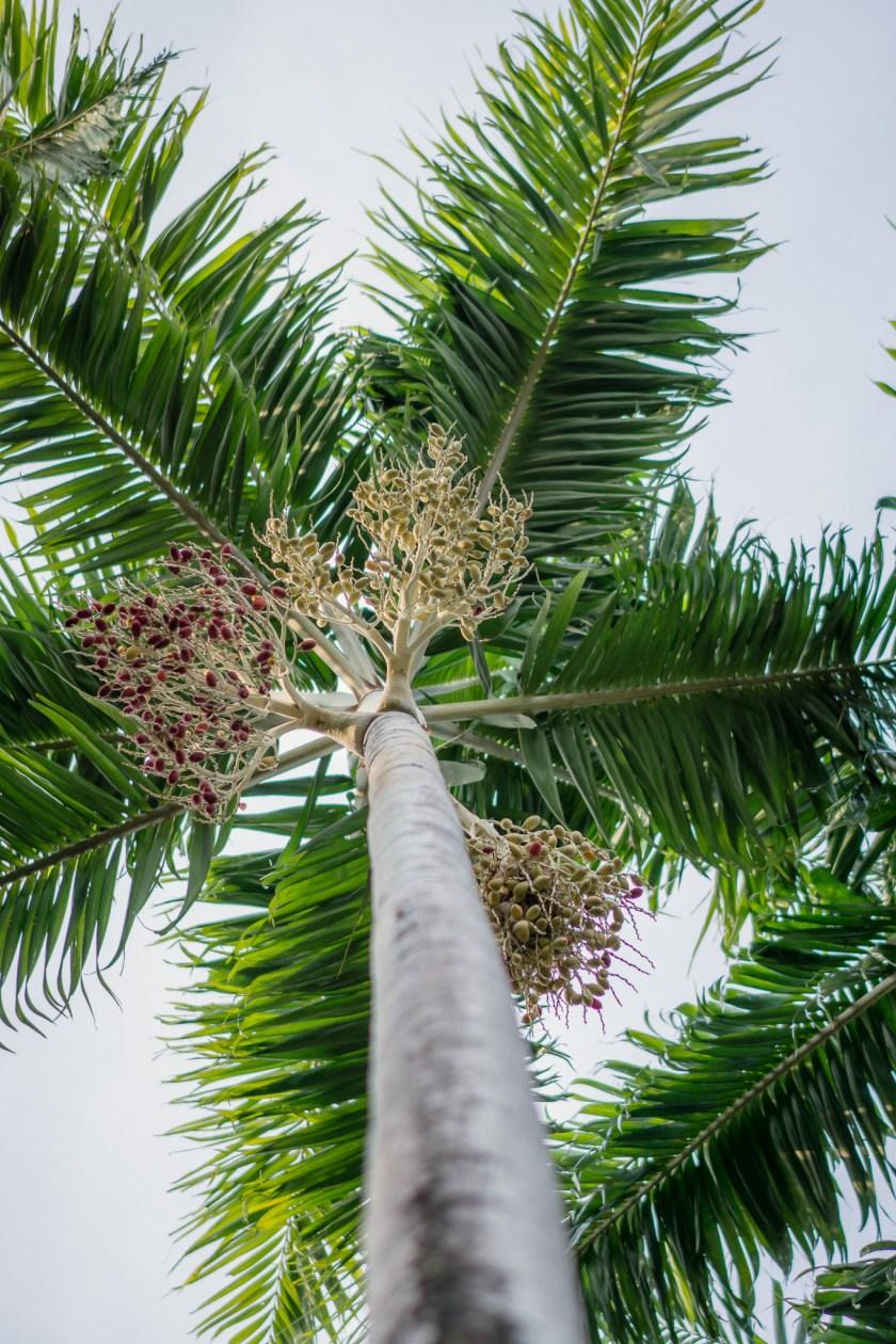Four Seasons Costa Rica