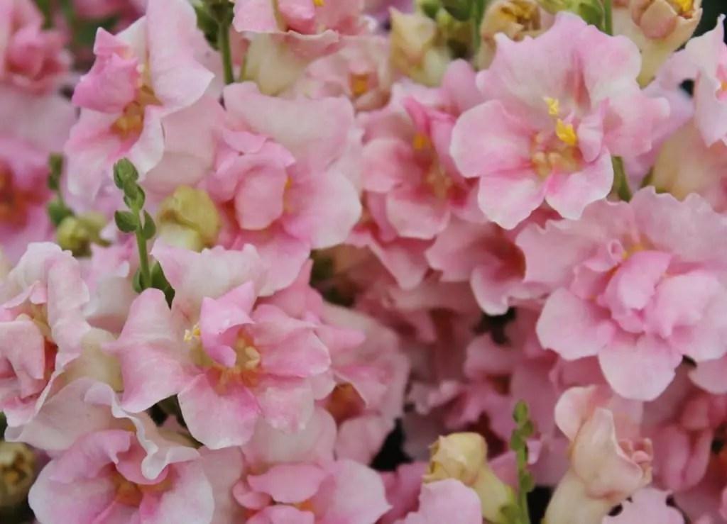 Inspiring Blooms   Molly and Mama
