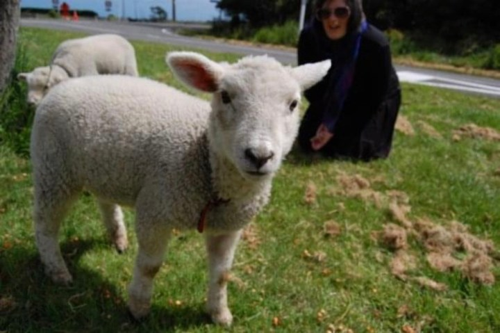 photo of Michelle and lambs