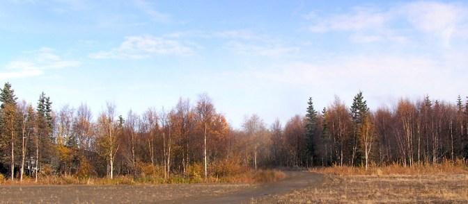 Tuluksak autumn forest