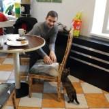 Кошачье Кафе в Остраве