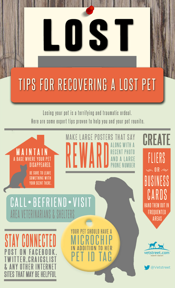 lost-dog-graphic-final-600px-1