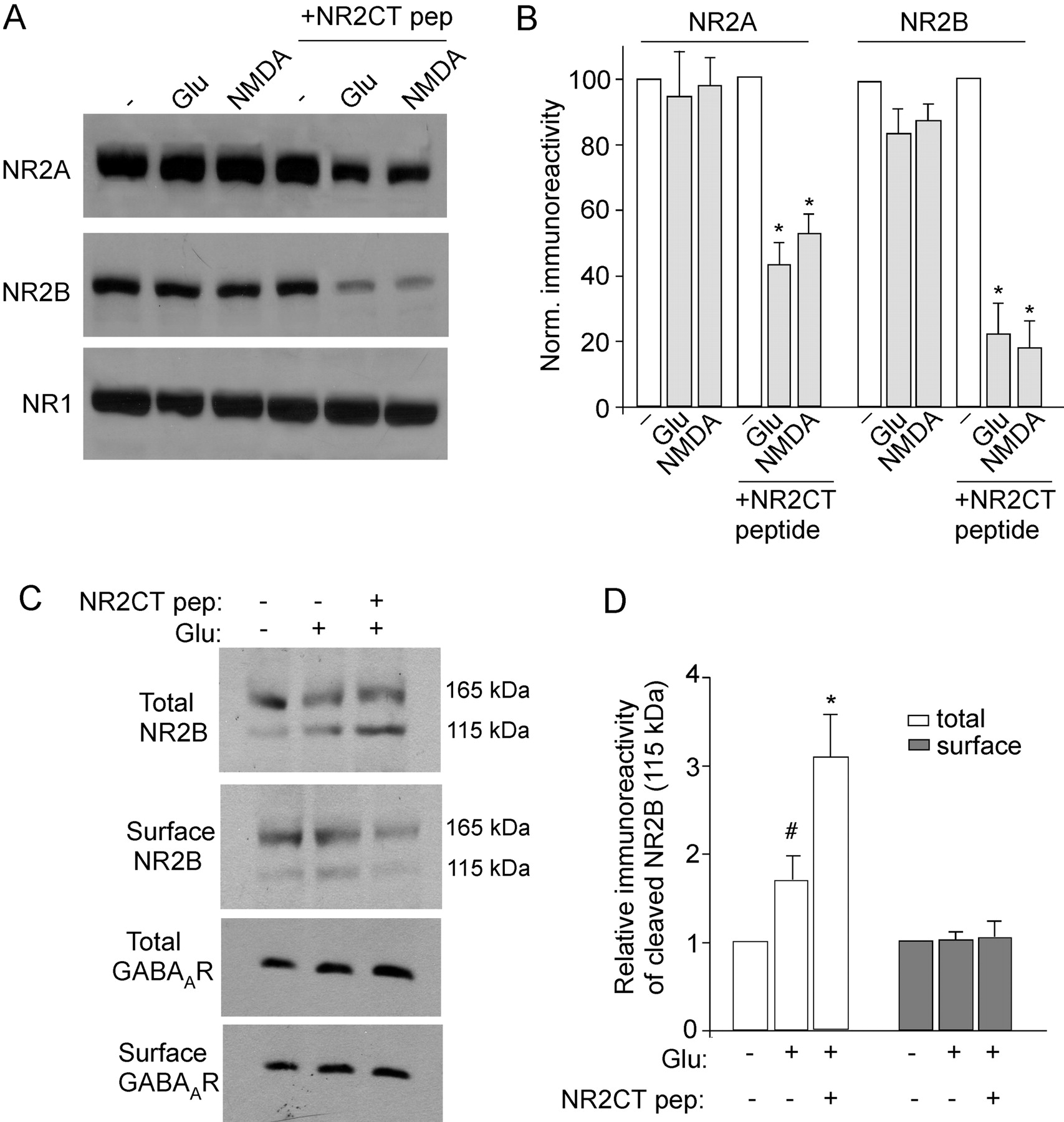 Postsynaptic Density 95 Psd 95 And Calcineurin Control The Sensitivity Of N Methyl D Aspartate
