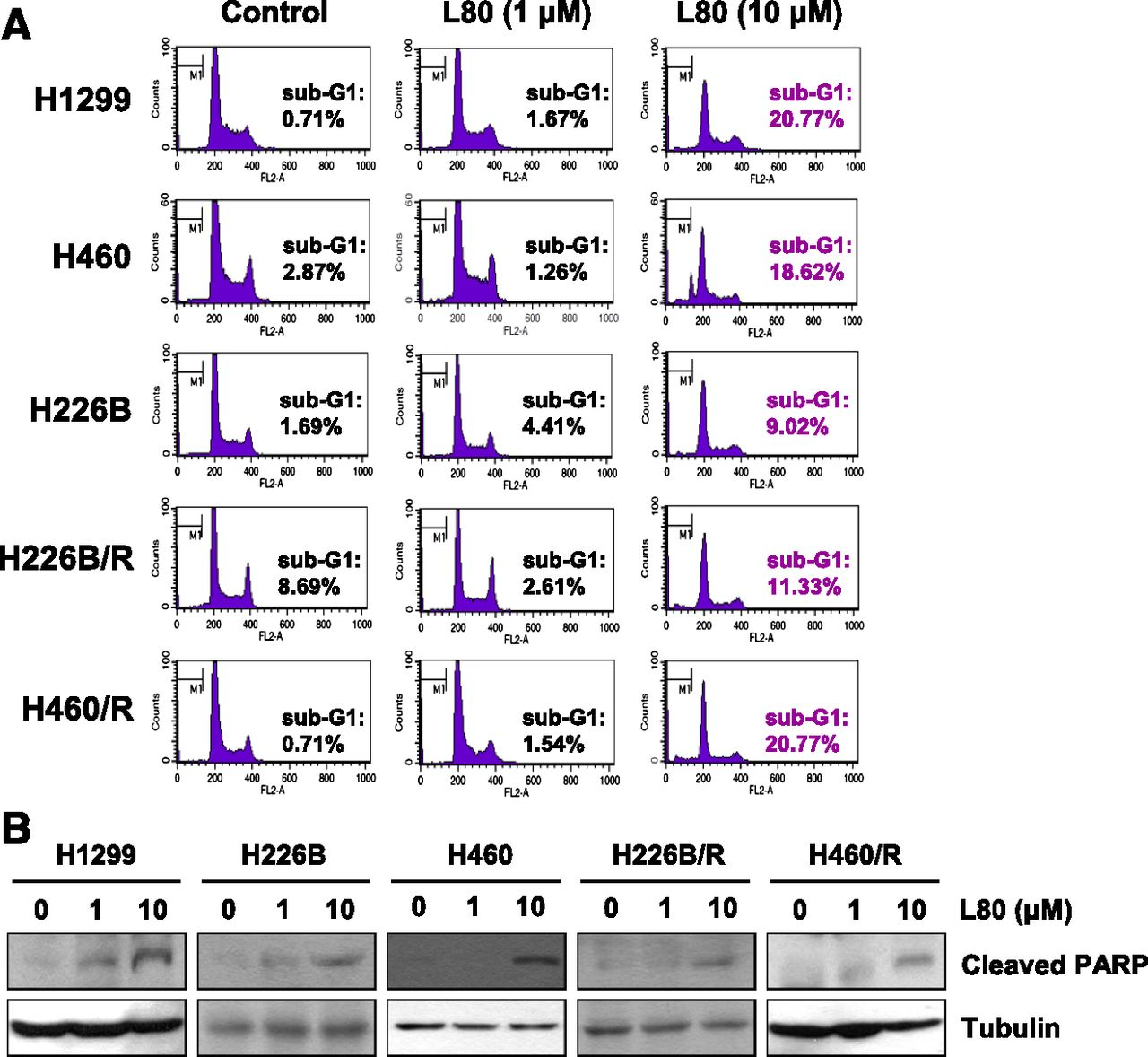Synthesis And Evaluation Of A Novel Deguelin Derivative L80 Which Disrupts Atp Binding To The