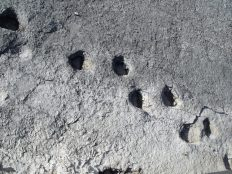 With my parents we finally got to the fossilised dinosaur footprints near Rovereto