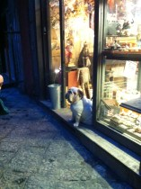 A bulldog guarding a store selling nativity figures