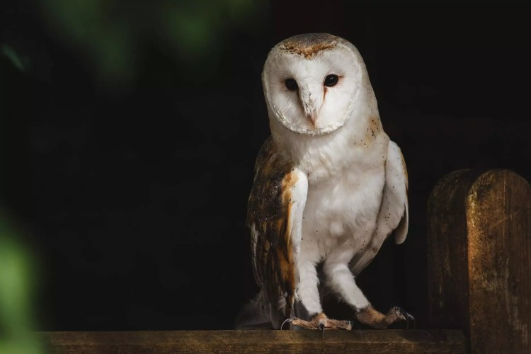Kids Night Owls | barn owl perched on tree