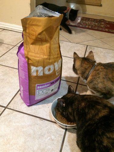 transition cat to senior food