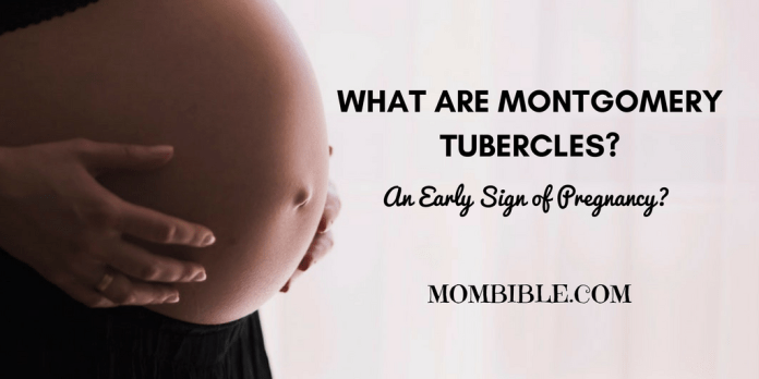 What are Montgomery Tubercles