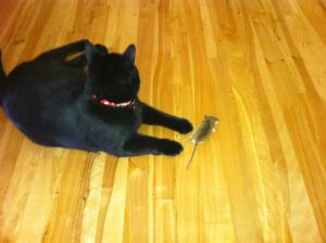 No mouse in my house!  Raji the mighty hunter!