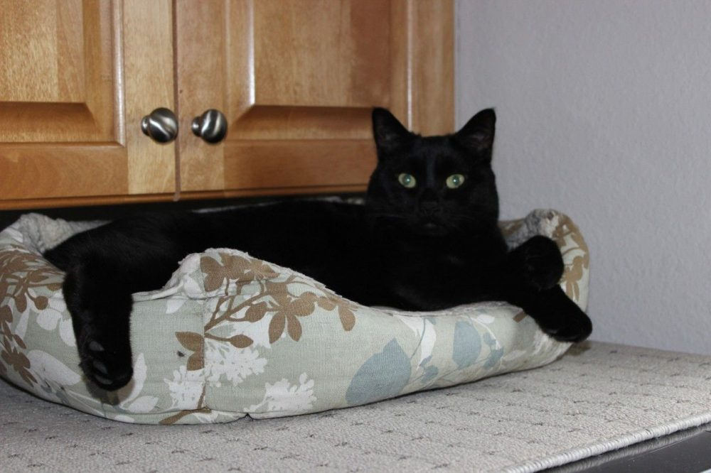 Our black cat's bed. When we don't know where he is, he can often be found curled up in his bed in the laundry room.